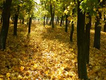 Autumn sunny path Stock Images