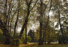 Autumn sunny trees Stock Photo