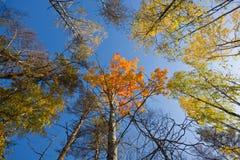Autumn sunny wood Stock Photography