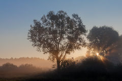 Autumn sunrise. After the rising of the sun's rays are scattered in the fog Stock Photos