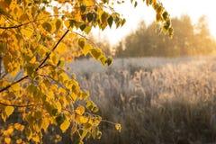 Autumn Sunrise Stock Fotografie