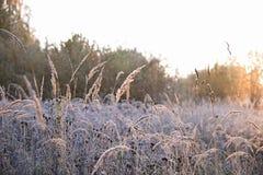 Autumn Sunrise Royalty-vrije Stock Afbeelding