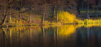 Stockholm Fall Foliage at Sunrise Royalty Free Stock Photography