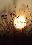 Autumn sunrise in field Royalty Free Stock Photo
