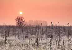 Autumn sunrise on the field Royalty Free Stock Photo