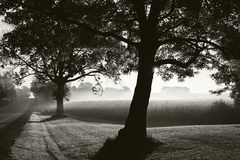 Autumn Sunrise through fog. A black and white landscape photograph of the sun rising through the fog behind a large row of trees Stock Photo