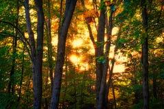 Autumn Sunrise Glow dans une forêt Photos libres de droits