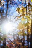 Nature mountains carpathians autumn leaves sunrise forest sunshine leaves yellow blue sky rays heat multicolored palette. Autumn sunrise in the mountain forests stock photography
