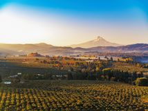 Autumn sunrise of Mt Hood with mist rising in the surrounding vineyards and fruit orchards royalty free stock images