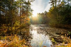 An autumn sunrise over calm rural pond royalty free stock photography