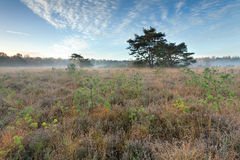 Autumn sunrise over marsh Stock Photography