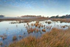 Autumn sunrise over wild lake Royalty Free Stock Images