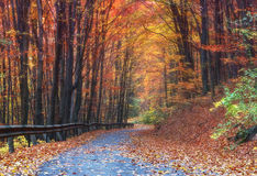 Autumn forest. Colorful autumn forest, red leaves lie on the ground, picturesque road through forest Stock Image