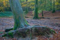Autumn Sunrise sul terreno comunale di Woodbury, Devon Immagini Stock Libere da Diritti