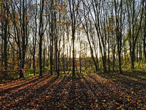 Early morning autumn sun behind trees casting long shadows Stock Image