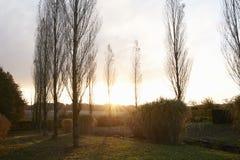 Autumn Sunrise Through Trees Over-Tuin Royalty-vrije Stock Foto