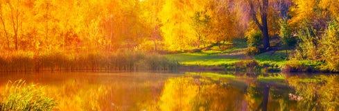 Autumn sunrise wide lake, gold birch Stock Photos