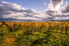 Autumn Sunset över guld- vinrankor och sjö på ett soligt och molnigt D arkivfoton