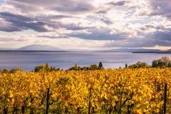 Autumn Sunset över guld- vinrankor och sjö på ett soligt och molnigt D royaltyfri bild