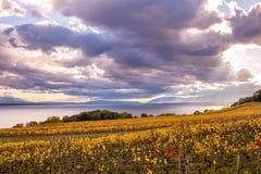 Autumn Sunset över guld- vinrankor och sjö på ett soligt och molnigt D arkivfoto