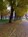 Autumn. In sunset Stock Image