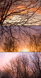 Autumn sunset backgrounds. Silhouettes of branches against the autumn sunset Stock Photography