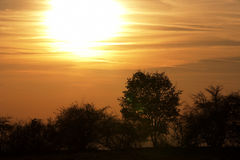 Autumn sunset with bare trees Royalty Free Stock Photo