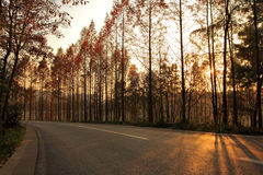 Autumn sunset, cedar and highways Stock Photos