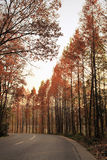 Autumn sunset, cedar and highways Royalty Free Stock Images