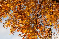autumn sunset color trees and branches stock images