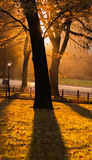 Autumn Sunset. Colorful autumn leaves and the sun is setting in Central Park, New York City stock photography