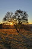 Amazing tree in yellow sunset Royalty Free Stock Photography