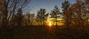 Autumn sunset in the forest stock photography