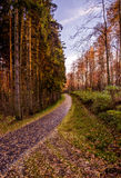Autumn sunset in forest in Czech Republic. Autumn evening walk in the park in our city Pelhřimov, Czech Republic. Beautiful colors of autumn sunset stock photos