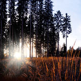 Autumn sunset in forest with sun rays. And grass Stock Images