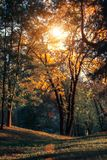Autumn sunset landscape with yellow and green trees. Fall park wirh green pines and yellow ashes in Minsk. Belarus. Hilly nature area wirh park in big city royalty free stock photography