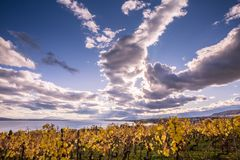 Autumn Sunset over Golden Vines and Lake on a Sunny and Cloudy D stock photos