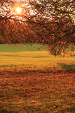 Autumn sunset in park Stock Photo