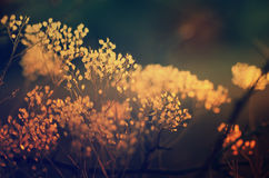 Autumn sunset plant Royalty Free Stock Images