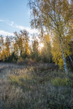 Autumn sunset. The suns rays streaming through the yellow leaves of the autumn forest Stock Image
