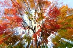 Autumn sunshine Stock Photos