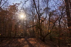 Autumn Sunshine. On the Itusi Trail in Lake Norman State Park Royalty Free Stock Photo