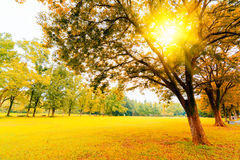 Autumn sunshine Stock Image