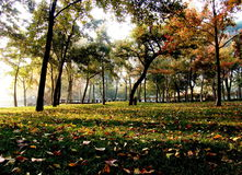 Autumn Suzhou Royalty Free Stock Photo