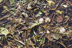 Autumn swamp, close-up Royalty Free Stock Photos