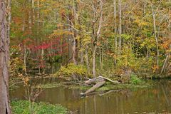 Autumn Swamp Stock Photography