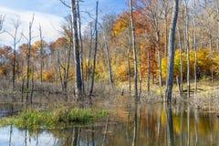 Autumn Swamp con il fogliame di caduta fotografia stock