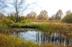 Autumn Swamp Inunde a paisagem, floresta do pântano com água ereta A fotografia de stock