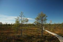 Autumn swamp. Kemeri, Latvia Stock Photography