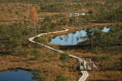 Autumn swamp. Kemeri, Latvia Royalty Free Stock Photo